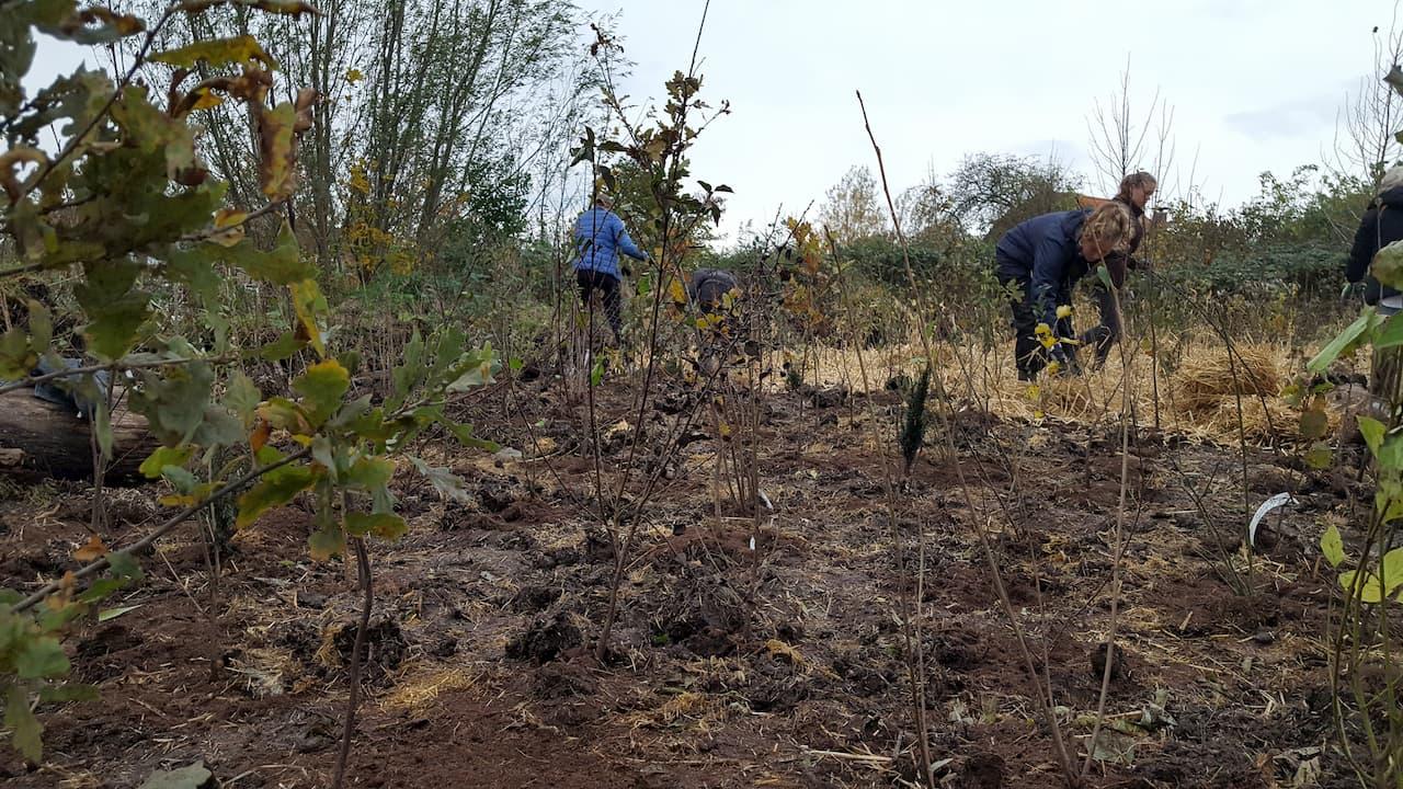 Schrieverswold | Plantdag | Mulchen door vrijwilligers