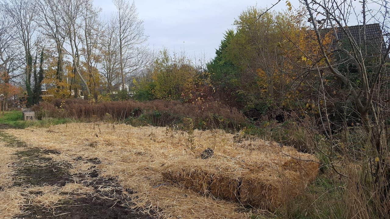 Schrieverswold | Plantdag afwerking | Plantvak D met bosplantsoen