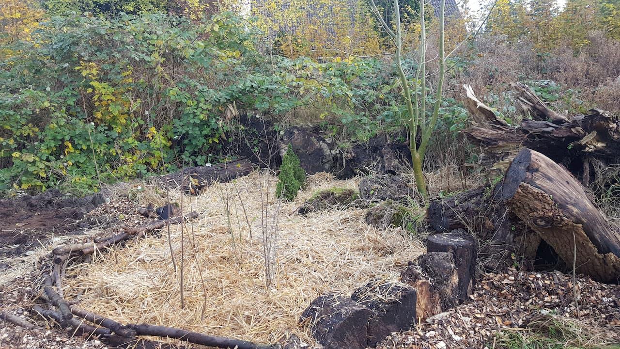 Schrieverswold | Plantdag afwerking | Plantvak C met bosplantsoen
