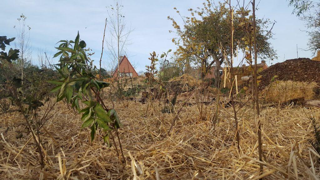 Schrieverswold | Plantdag afwerking | Bosplantsoen close-up