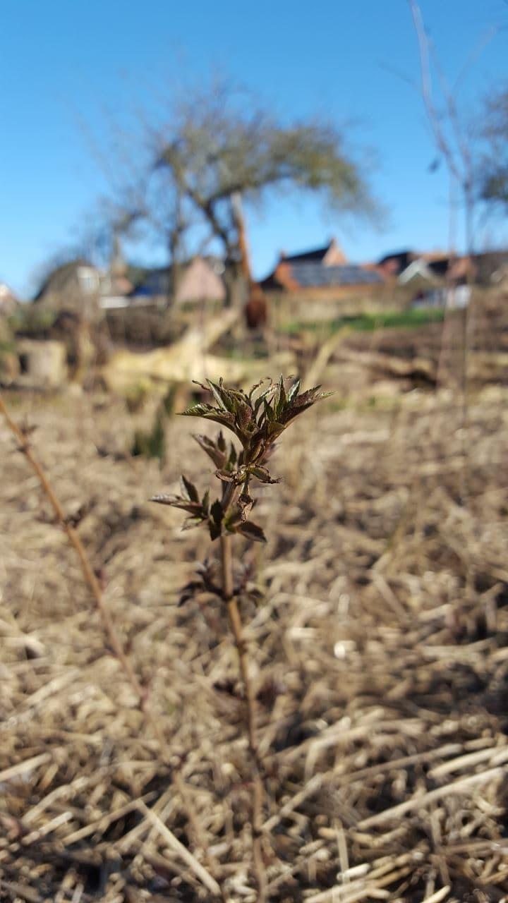 De groei is gestart in ons Tiny Forest