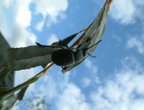 Insecten- en bodemdierentelling