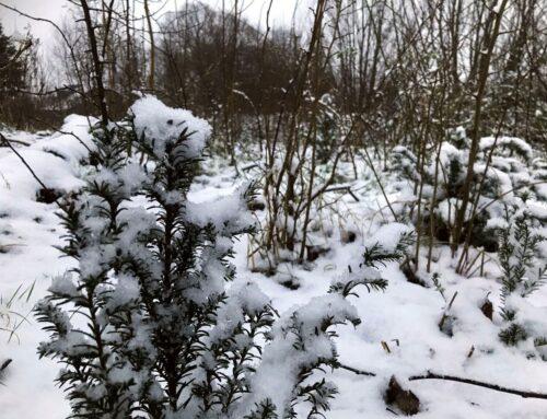 Sneeuw in het minibos